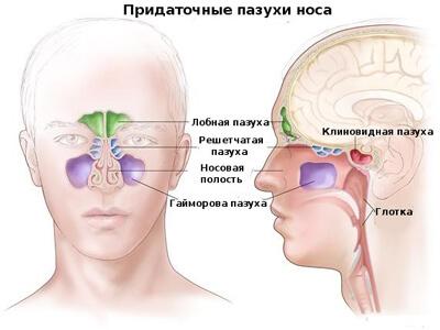 Хронический фронтит: причины возникновения, симптомы и лечение хронического фронтита
