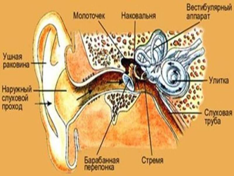 грибок в ушах лечение народными средствами: