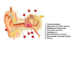 Перфоративный отит: причины прокола (перфорации) барабанной перепонки при отите и лечение заболевания