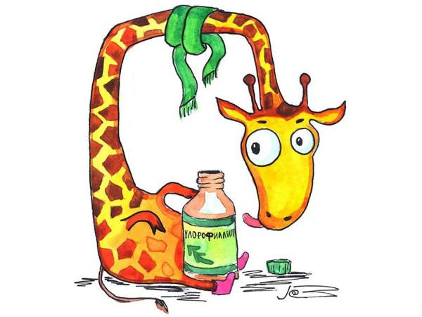 Применение хлорофиллипта при тонзиллите у детей и взрослых