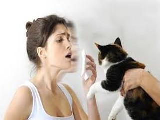 Аллергия на кошку у взрослых